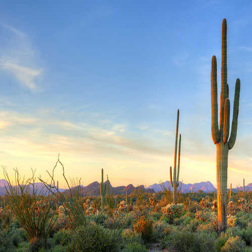 homes for sale avondale az